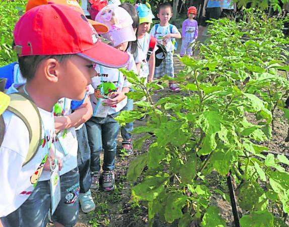 逢学校假期,就会有学生来参观江坤河的菜园,让小朋友多接触大自然,知道农夫们的种植生活。