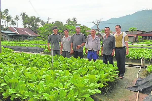 鱼池菜园农民热情淳朴,不分种族和谐共处;左起为黄永年及黄良盛。