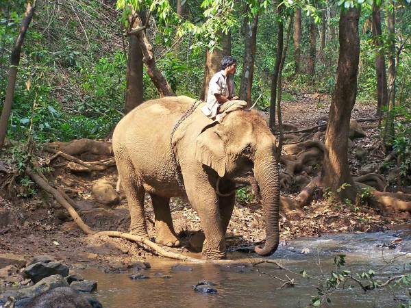 神象来了:老母象每个月穿过丛林,来到村落为乡民治病。(设计图片,非本文大象)