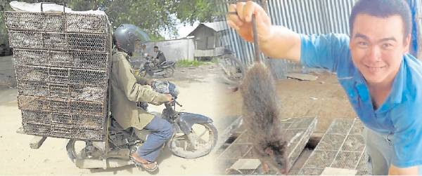 见怪不怪:越南人爱吃田鼠,而柬埔寨的农民捉到田鼠后,就用摩哆运送到越南卖,沿途田鼠吱吱叫,途人已见怪不怪。