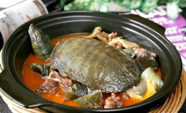 桌上美食:鳖肉有多种煮法,是一些老饕喜欢的野味。