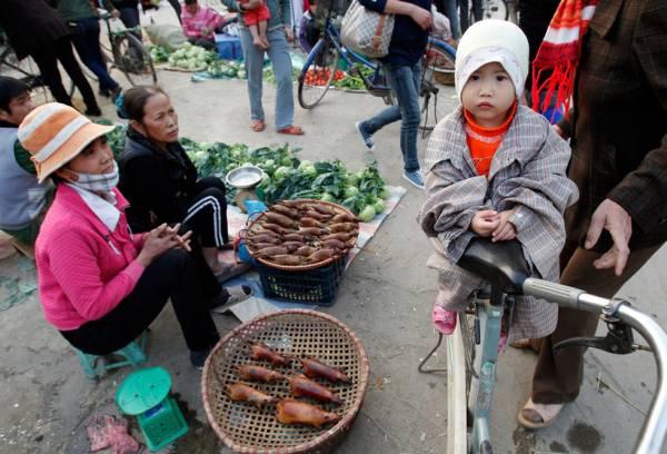 随街售卖:越南胡志明市路边的烤鼠肉,你敢试一口吗?