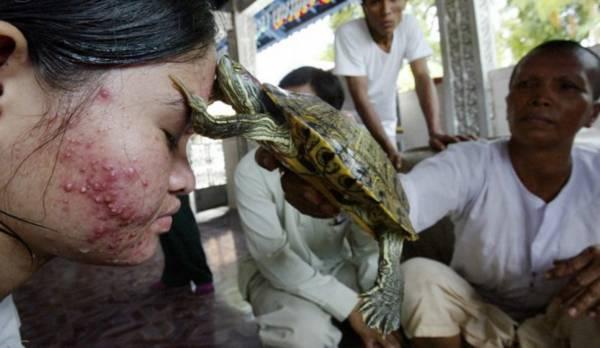 乌龟治病:除了老母象,在靠近金边的干丹省,据说亲吻淡水龟可以治疗皮肤病和其它身体不适。