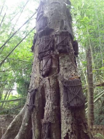 树神守护:老树上的小窗,就是婴尸的家,村人相信树神会守护死去的宝宝。