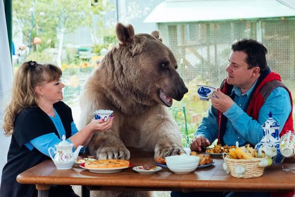 现代人越来越爱养稀奇古怪的动物,蛇、守宫、刺猬已经很逊掉了,在俄罗斯有一对夫妇把300磅的大巨熊当宠物养,还养了23年呢!
