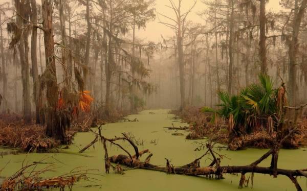 美国路易斯安那州的曼查克沼泽,被列为是世界上最恐怖的沼泽。