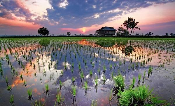 晚霞余光照落在稻田中,景色额外美丽,让人一丝丝心动,重新爱上这片大地。