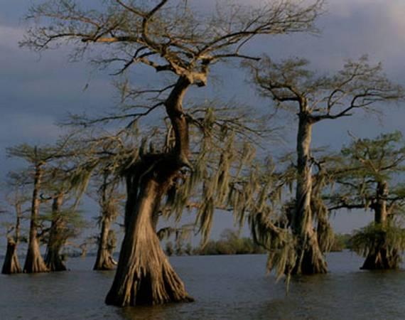 曼查克沼泽里的树木长得都很恐怖、阴森,一副吃人妖怪的模样,让人看见就胆战心惊。