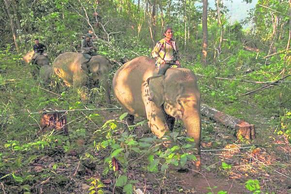 此景不再:象夫们骑着大象缓缓走回瓦卡鲁普附近丛林中的营地,这种日出晚归的情景现今已少见。