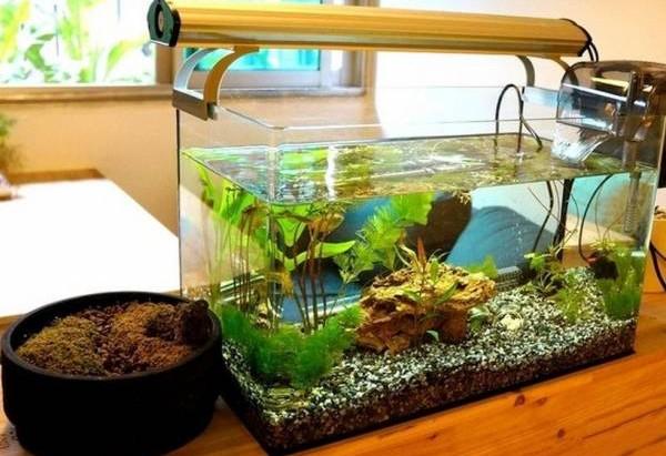 将鱼池改为鱼缸放置在屋内,催财效果更佳。