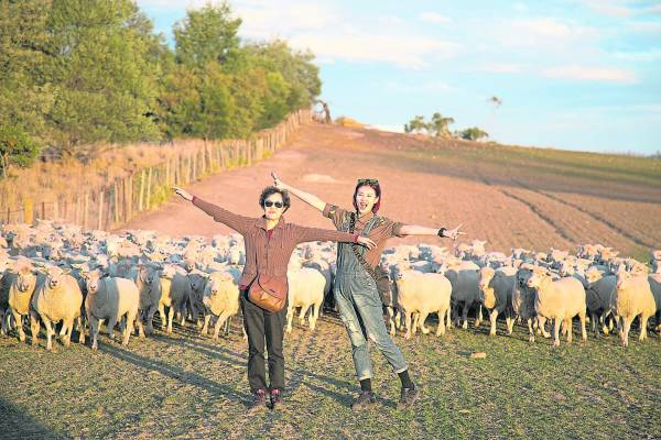 被数百只羊360度的围绕着,当下的感动与兴奋,真是非笔墨可形容……