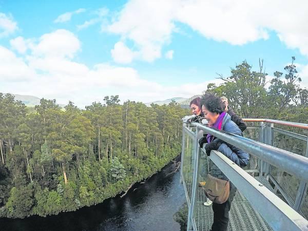 俯瞰茂密葱郁的温带森林,惊叹大自然的伟大与奥妙。