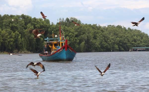 十八丁旅游业者以最创新的方法,吸引了鹰群飞来叼食物,游客乐得观奇景。