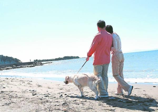 在婚姻里学会宽容,就能领略爱情的精髓。