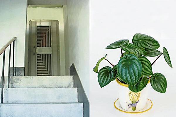 一打开门就见向下楼梯,会导致漏财,胡老师建议读者在楼梯口角落摆放一个圆形叶子的盆栽,以阻挡漏财现象。