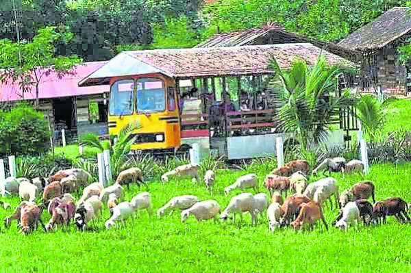游客坐在缆车里与动物亲密接触。 UK Farm 休闲农场 地址:Plot 8, Project Pertanian Moden Kluang, KM13 Jalan Batu Pahat, 86000 Kluang, Johor, Malaysia. 电话: +607-759 7555 网站: www.ukfarm.com.my 卫星导航:2.018122, 103.218741