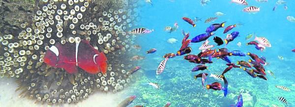 在岛上唯一的活动就是潜入海底,欣赏不同的海洋生物……