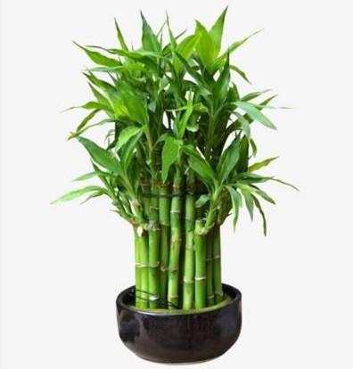 绿色植栽能加强学子脑筋灵活运。