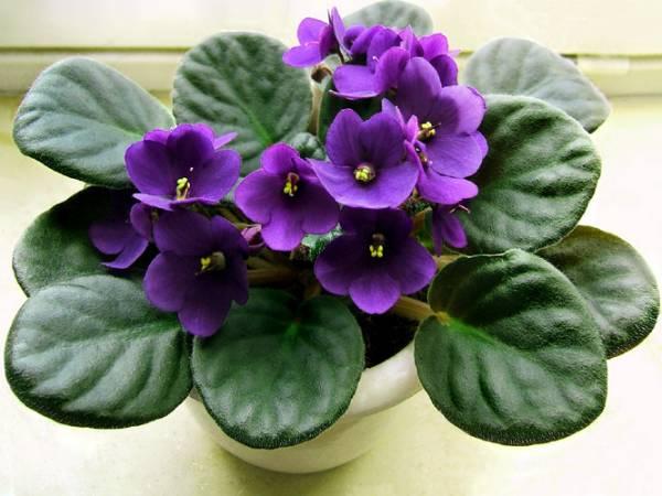 紫色鲜花能加强脑袋快速吸收书本的知识。