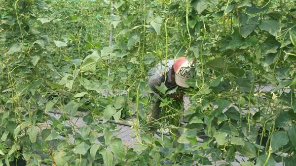 大家一起跟着工作人员,学习如何种植照顾蔬果。