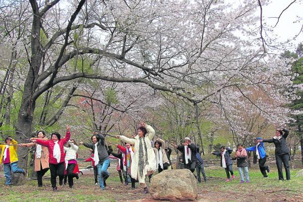 在韩国的雪岳山樱花盛开,捡起枯枝舞起太极剑,心神皆醉。