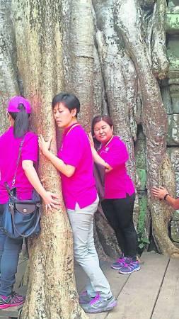 2016暹粒游学禅——学员感应了千年古树的信息能量场 。