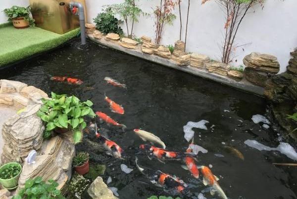 鱼池是在屋外,池水见天,会催动烂桃花,造成夫妻感情失和,而这种也叫财富桃花劫 。