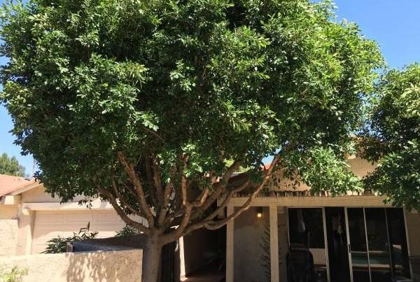 在家门前种棵大树,不但可以辐射,还会为我们带来财运呢!