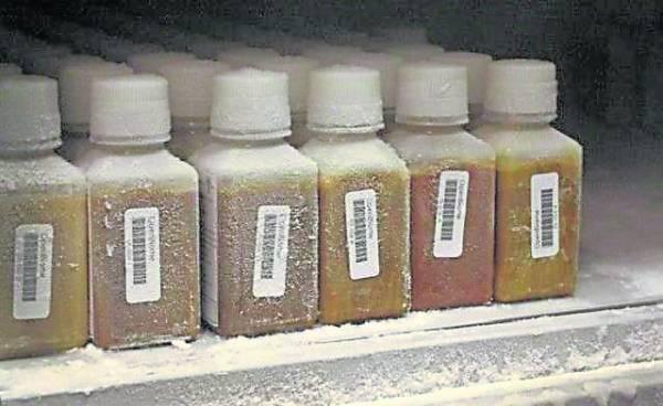 搜集到粪便样本要放在80℃条件下保存。