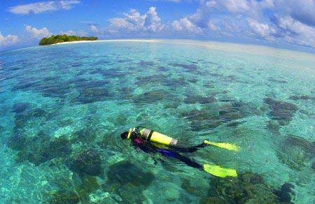 这里是潜水胜地,只要下海便能清楚地看见海洋生物。