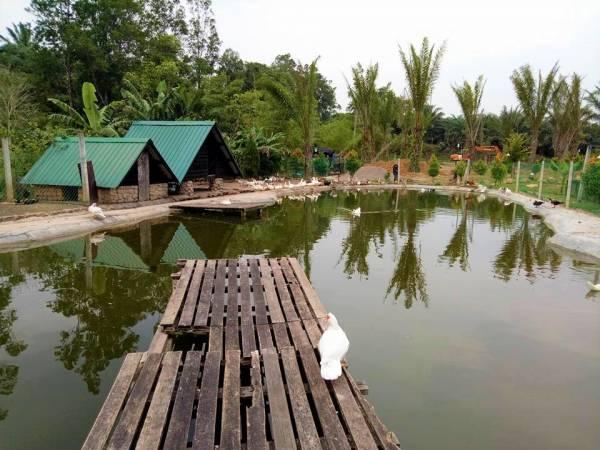 那么大的池塘,住着许多小动物,悠游自在的活动。
