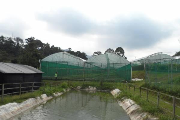 这里的植物都使用天然泉水浇灌。