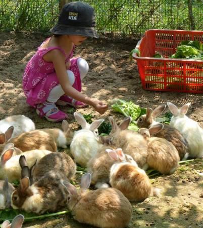 这里的小动物都好幸福,天天吃的是有机蔬菜呢。