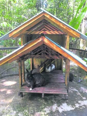 毛茸茸的小兔子拥有自己的别墅哦!