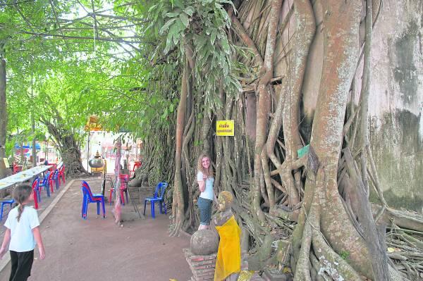 300年的树根,让庙宇的门口隐藏起来,难以发觉。