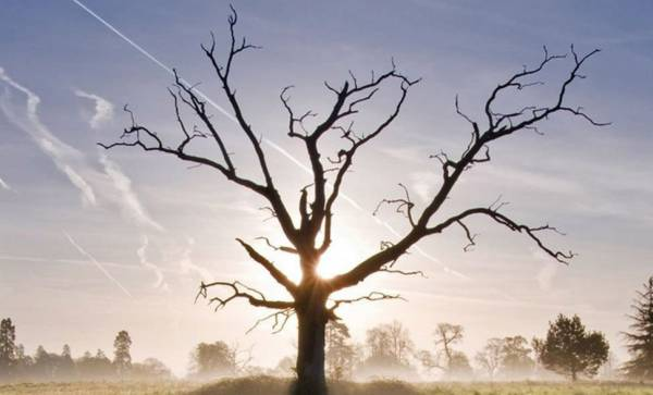 如果住家附近有枯树,可要注意其影子有没有映在你的家,这可会影响屋内人四肢的问题。