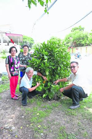 新咖啡山新村村委和村长曾广海(右)表示眼前这棵就是村里第一棵咖啡树,由霹雳州行政议员拿督马汉顺种下。