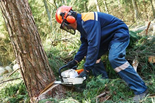 """祖坟有枯树,犯了""""刺面煞"""",最好择日砍伐 ,破解凶煞以保全家健康平安。"""