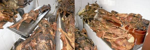 地下室的遗体、残肢到处乱放,又暴露在常温之下,卫生环境十分糟糕。