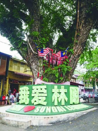 林明的许愿树已有百年历史,充满灵气。