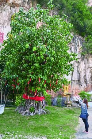 善信向许愿树求健康平安、顺顺利利。