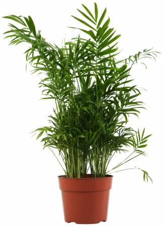 竹树有竹报平安之意,是理想的化煞绿色植物。