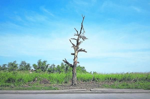 如果家中有枯花枯草一定要清除干净,特别是枯树更会带来死气,使家人霉运随身。