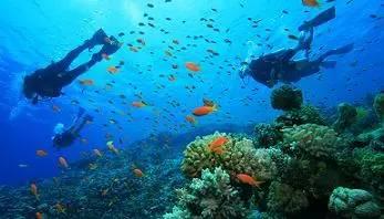 爱潜水的旅客,又怎么能错过这么好的浮潜天堂呢!