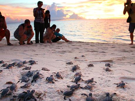 每到一个特定的时间,海龟就会上岸产卵,记得别开散光灯哦!
