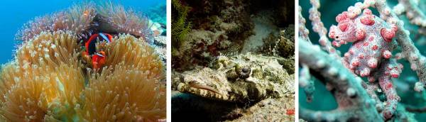 你看过深海里的海洋生物吗?(左起热带鱼、海蛞蝓、粉色海蛞蝓)