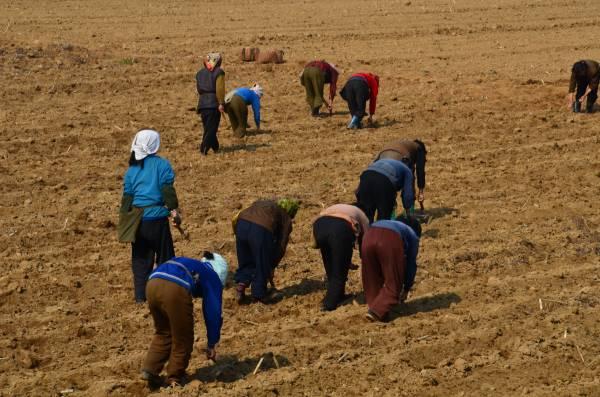 当乘搭的高丽航空进入朝鲜的机场,乘客们仿佛进入时光隧道,回到七十年代初的感觉,因为机场两旁都种满庄稼,一些农民则忙着播秧。