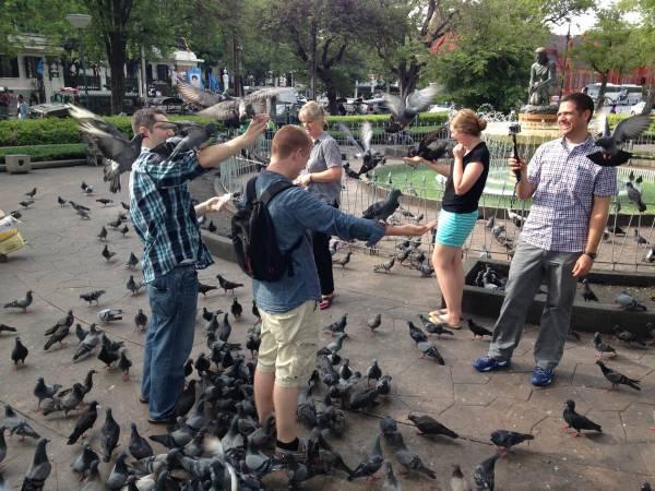 开心喂鸽子,突然有人来要钱,真是大煞风景。