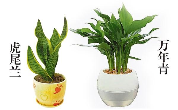 """浴室放置土种植物如虎尾兰和万年青,可提升""""孕""""气,但千万别摆设仙人掌。"""