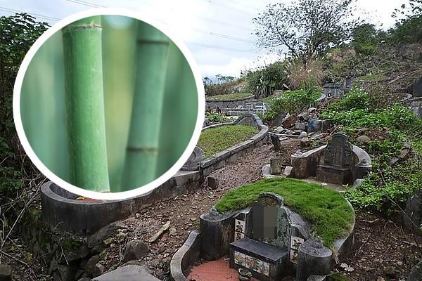 妙婵师太揭露,有些人为了求横财,不惜在人家的坟墓插上青竹,这种做法非常缺德,而且会招来恶报。
